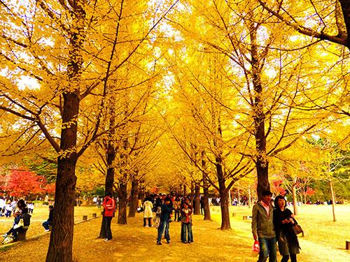 Một góc mùa thu Hàn Quốc