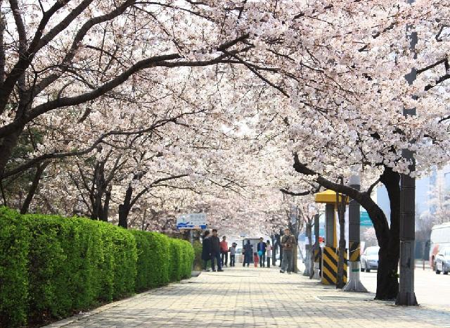 Giao thông tại Seoul