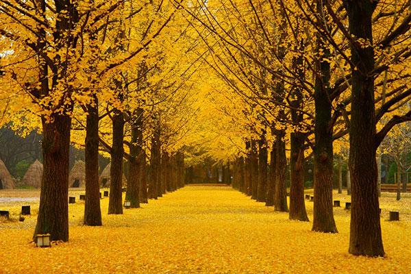 Đảo Jeju vào mùa thu