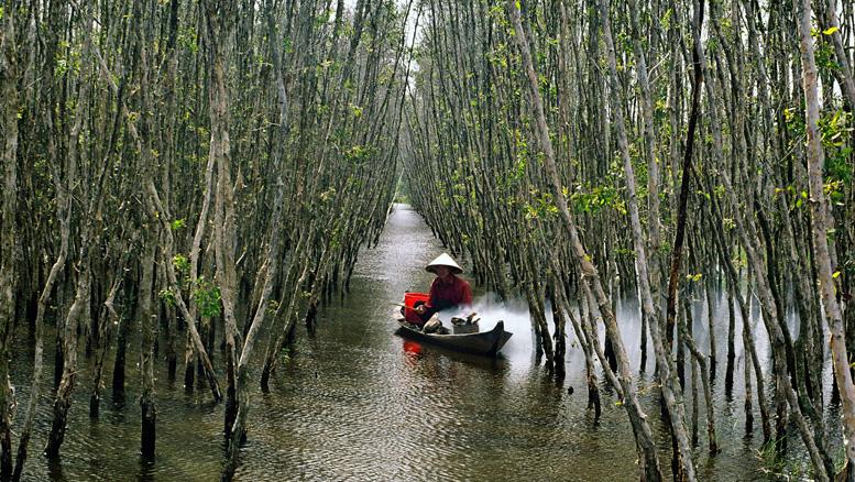 Rừng quốc gia U Minh hạ