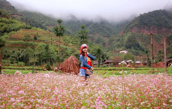 Hoa tam giác mạch - Hà Giang