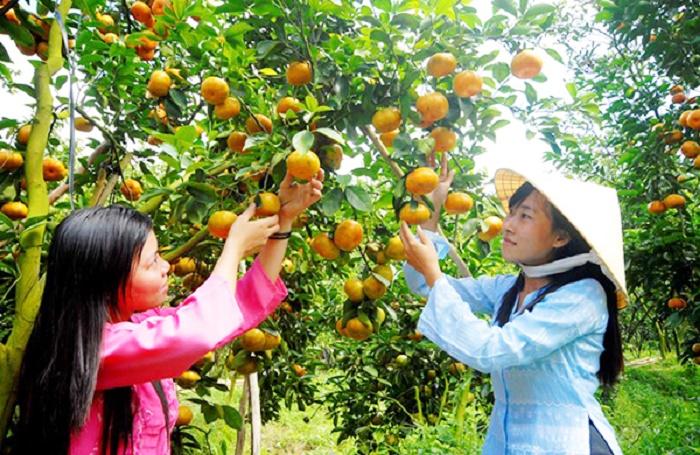 Miệt vườn trái cây Cần Thơ